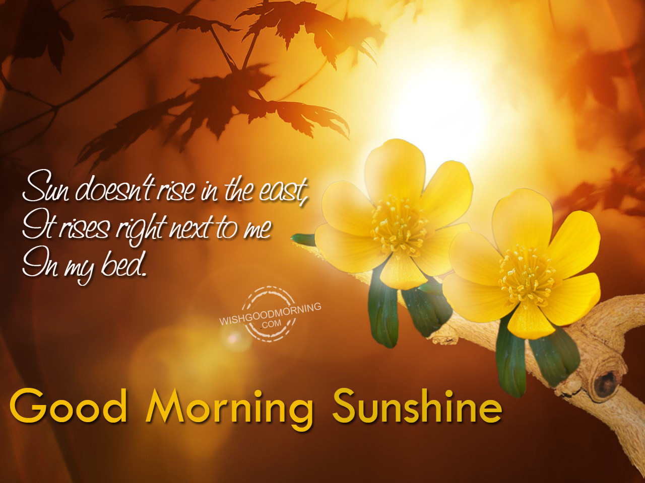 Good Morning Sunshine Wishes : Good morning wishes for wife pictures