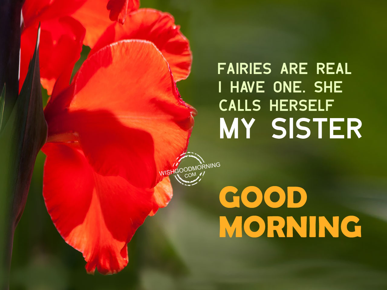good morning wishes for sister good morning pictures fairies are real