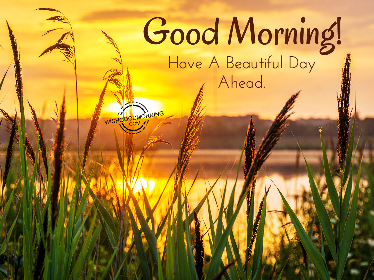 Good Morning Beautiful Pictures : Good morning wishes pictures