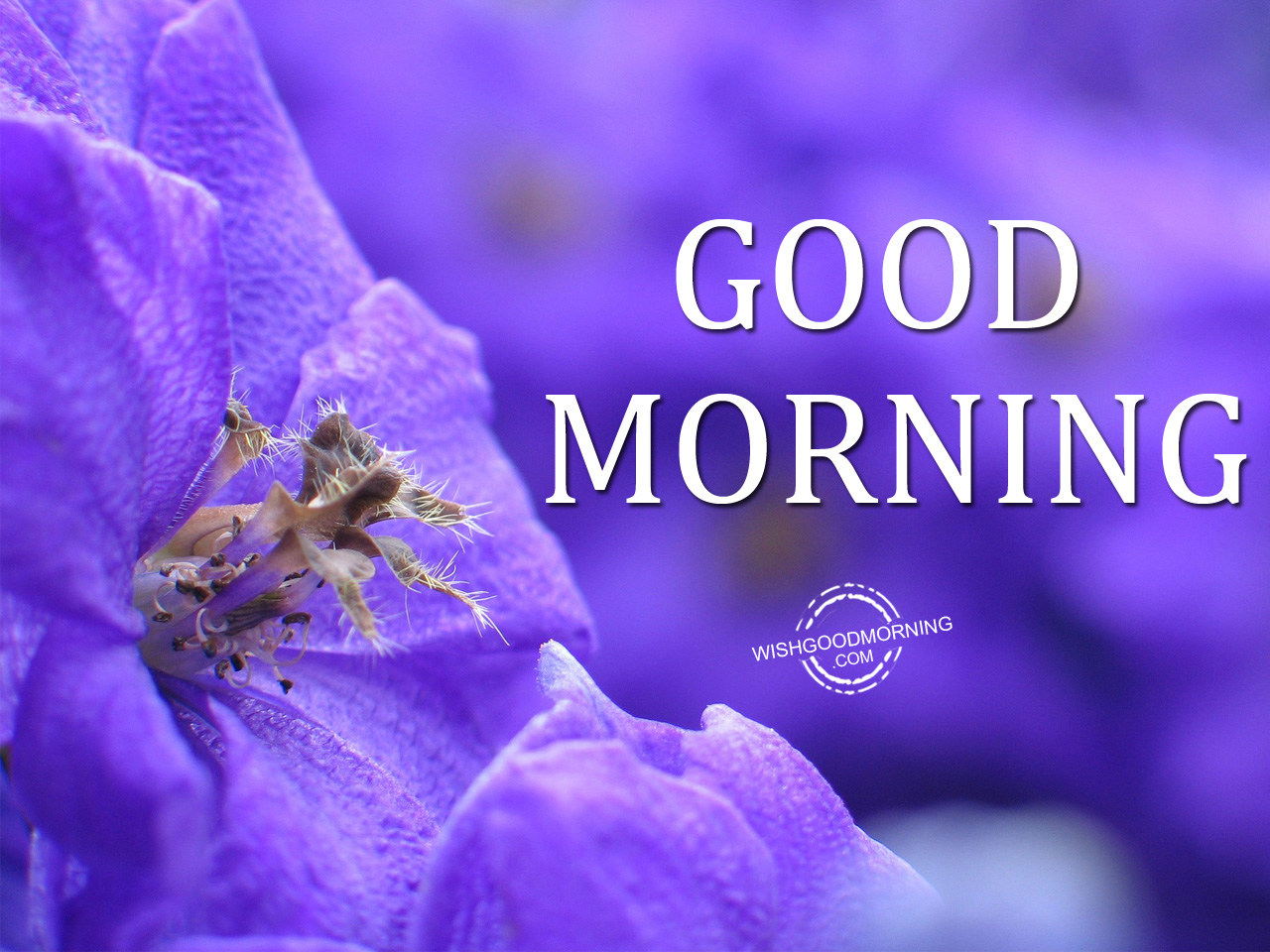 Good Morning Pictures And Images : Good morning wishes pictures