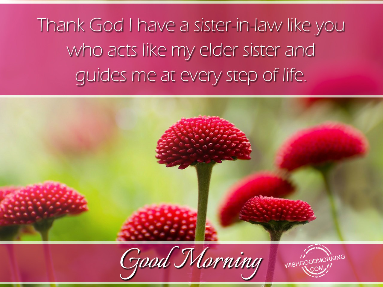 Good Morning Wishes For Sister In Law Good Morning Pictures