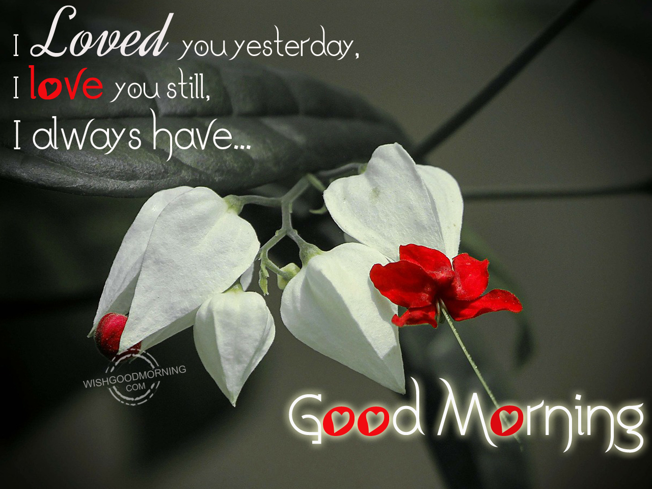 I Loved You Yesterdayi Love You Still Good Morning Pictures