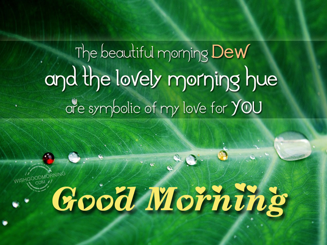 The Beautiful Morning Dew And The Lovely Morning Hue Are Symbolic Of