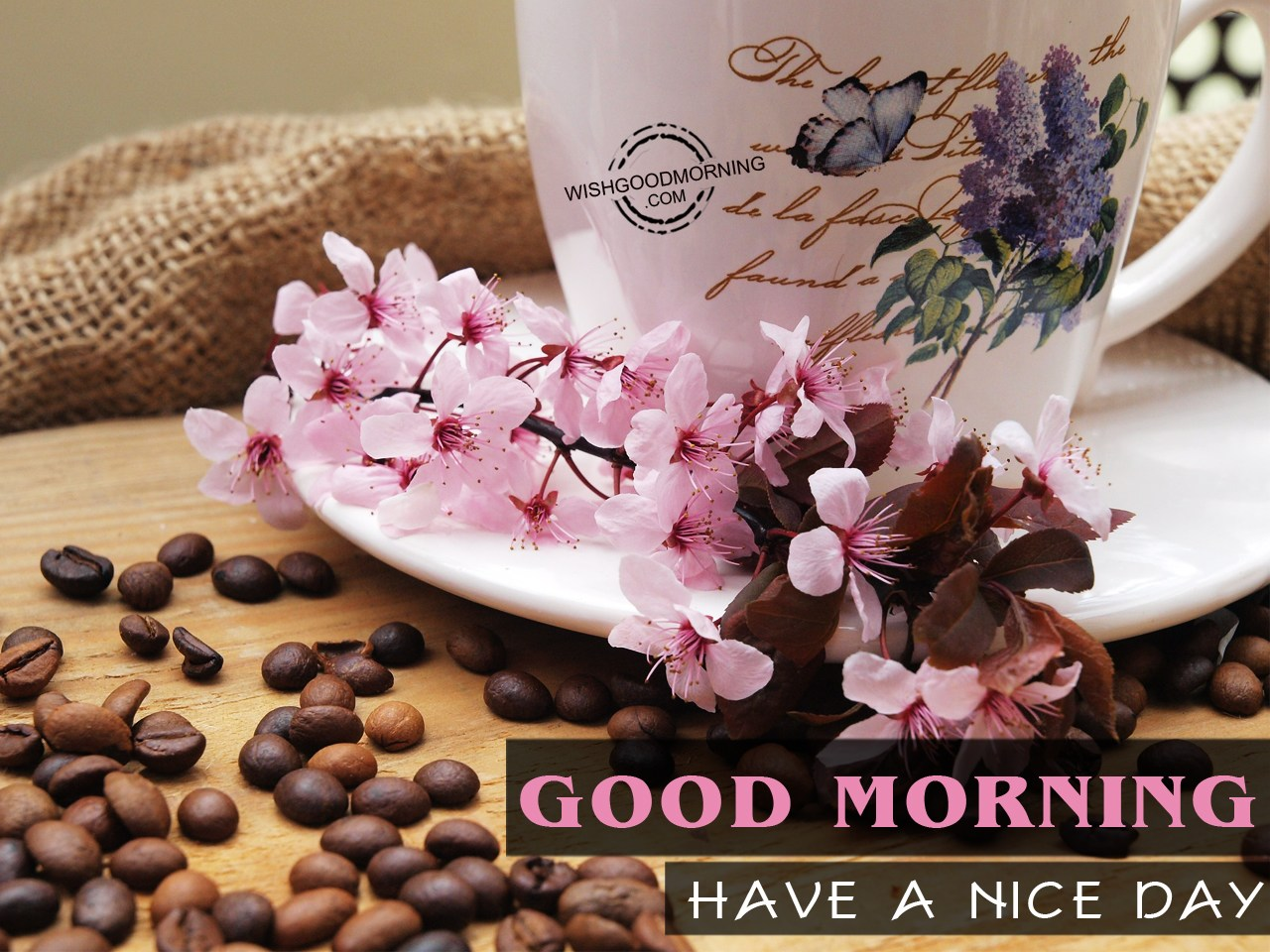 Good Morning Have A Nice Day Good Morning Pictures
