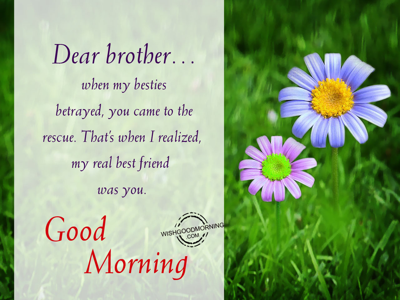 Dear Brother,In My Life Many People Have Come  Best Wishes In Life