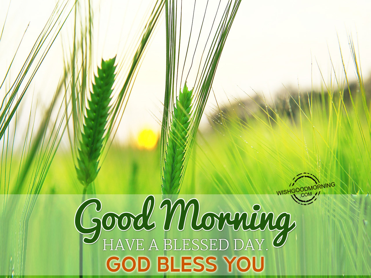 Good Morning Have A Blessed Day God Bless You Good Morning