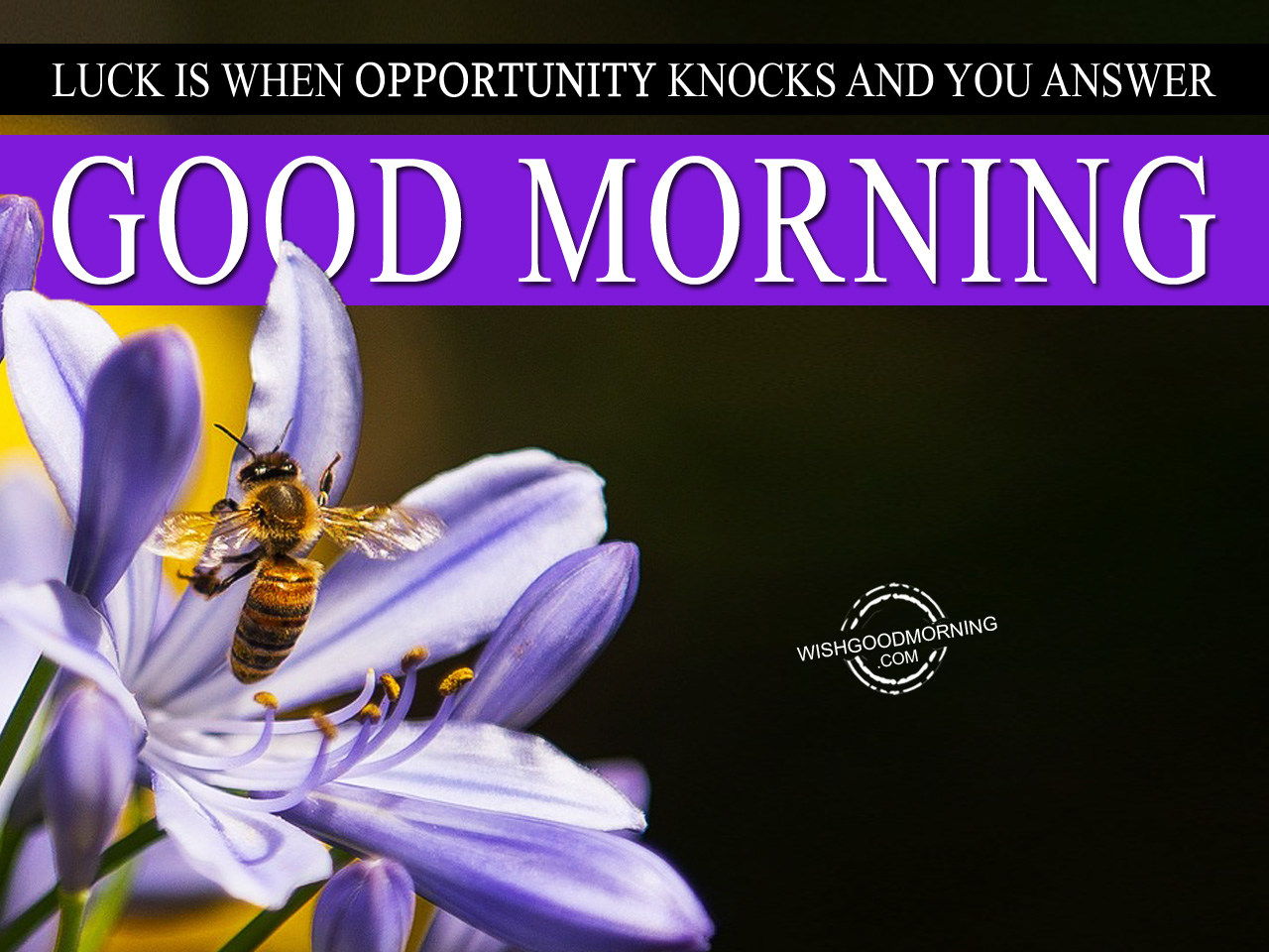 Good Morning Answer : Luck is when opportunity knocks and you answer good