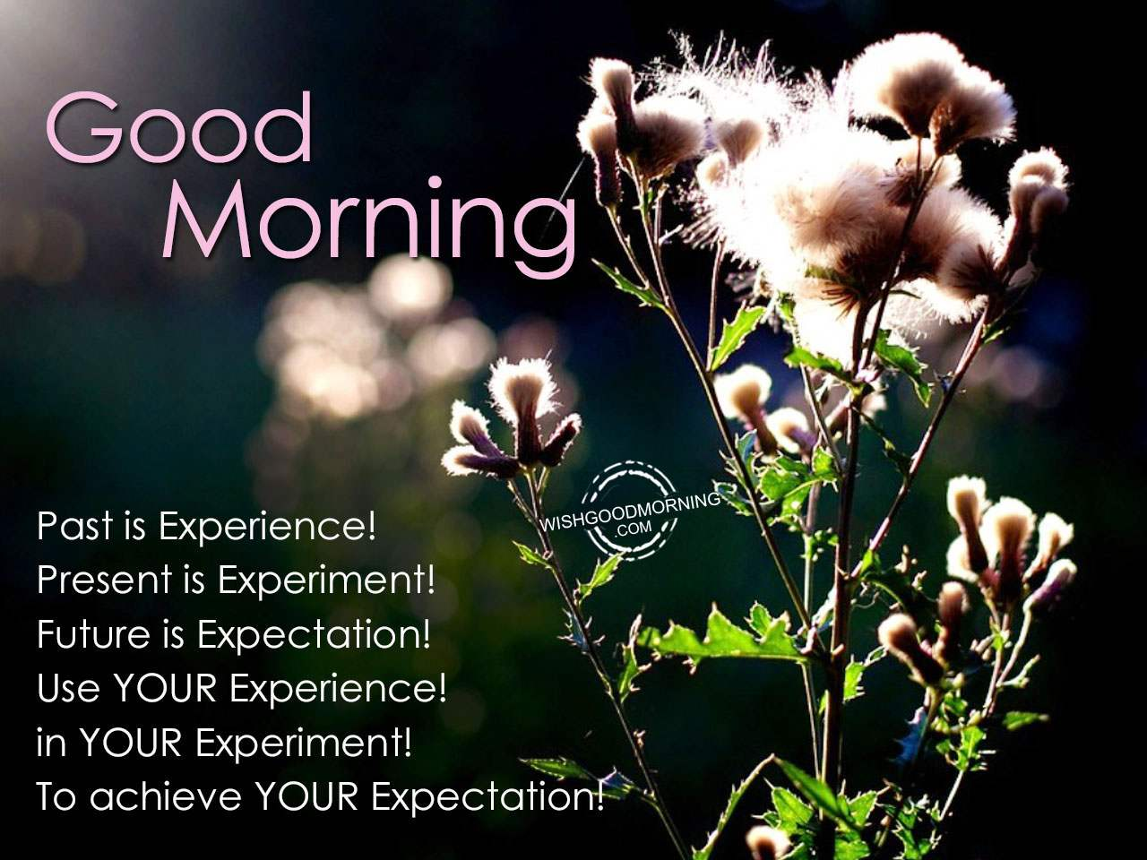 Good Morning Sunday Past Presenters : Good morning wishes pictures