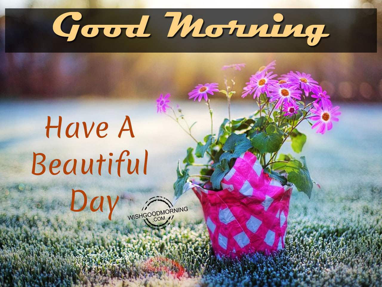 Very Good Morning Have A Beautiful Day Good Morning Pictures