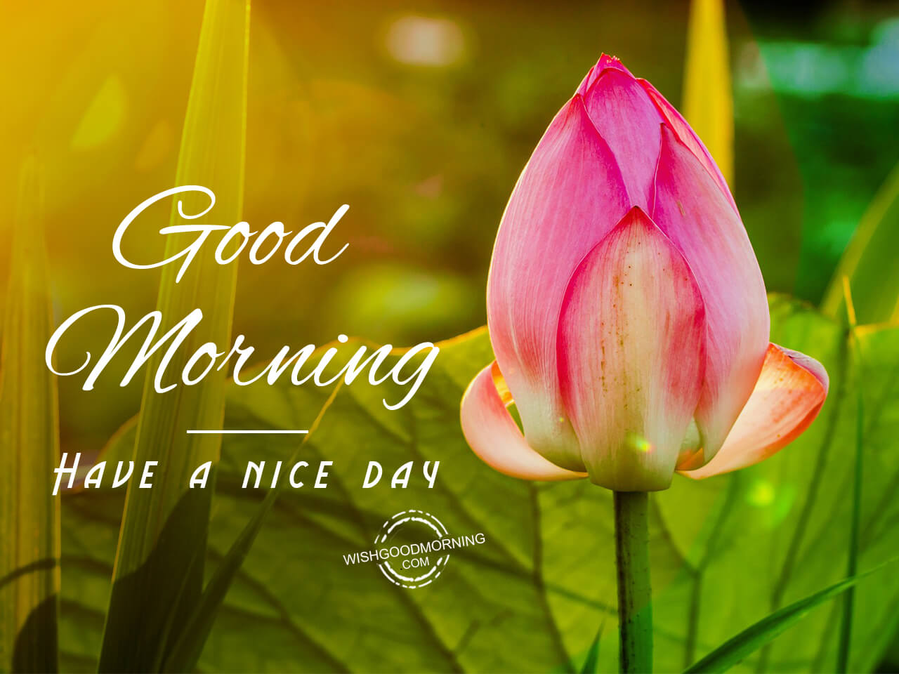 Good Morning Have A Nice Day Good Morning Pictures Wishgoodmorning Com